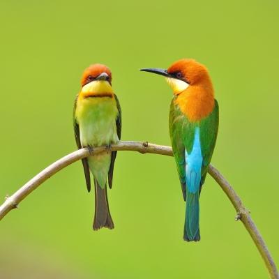 brighton couples counsellor